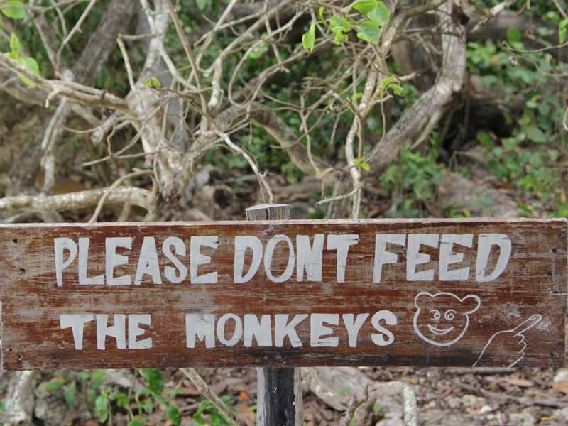 please-dont-feed-the-monkeys